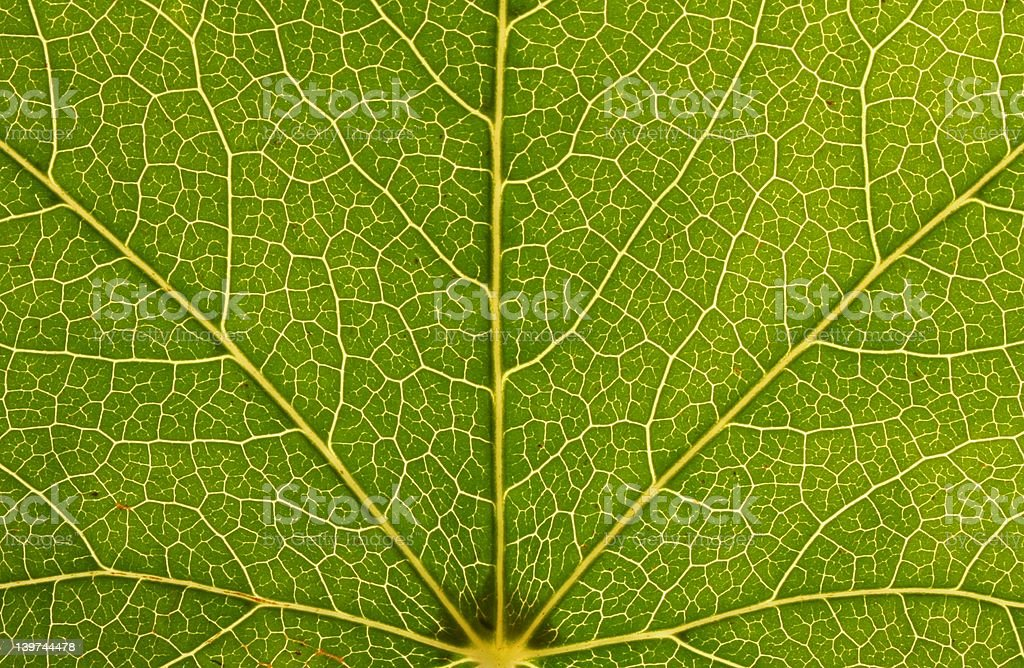 Environmental veins stock photo