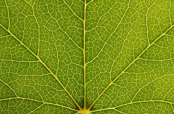 environmental veins - fractal stock photos and pictures
