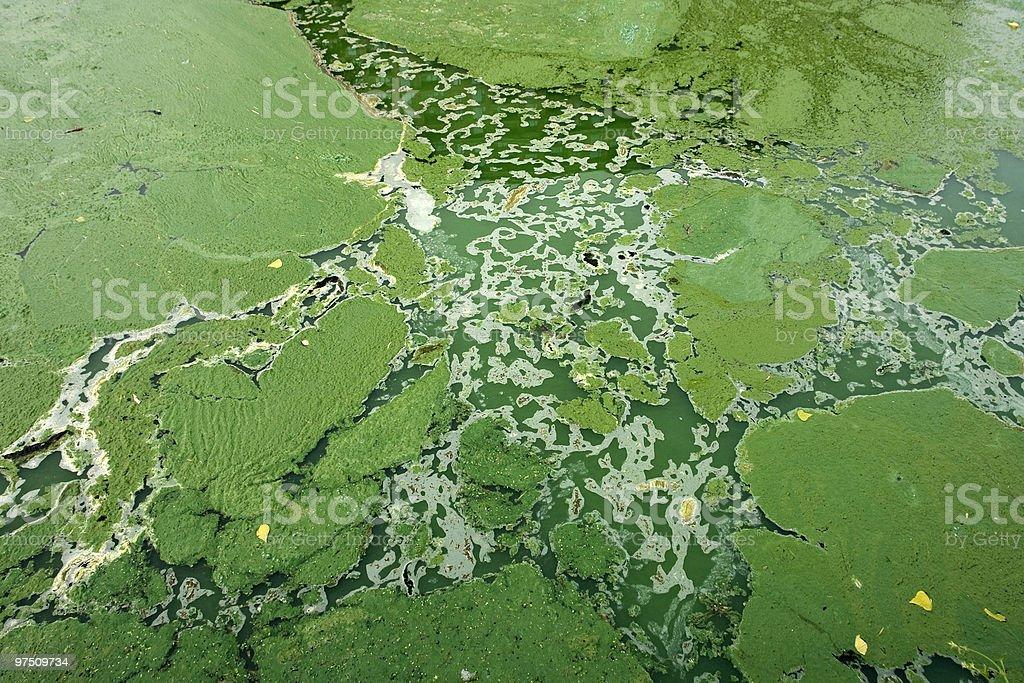 Environment-Algae background royalty-free stock photo