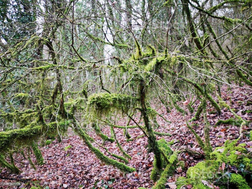 Forêt de l'environnement - Photo