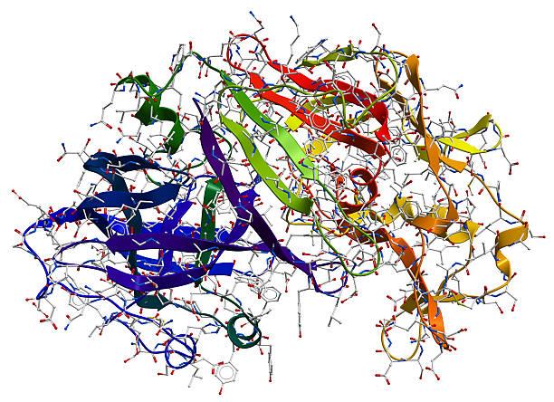 enzym pepsyny 3d model - enzym zdjęcia i obrazy z banku zdjęć