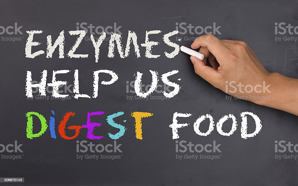 enzymes help us digest food stock photo
