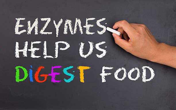 enzymy pomagają w trawieniu pokarmów - enzym zdjęcia i obrazy z banku zdjęć