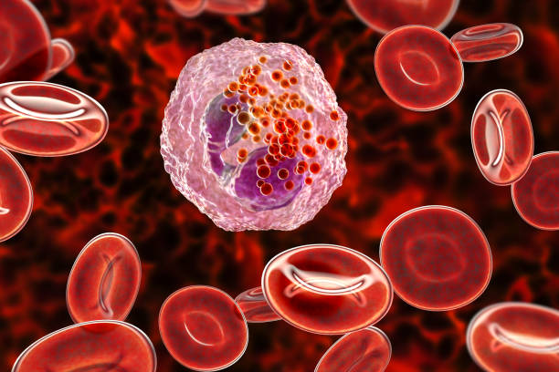 Eosinophil, a white blood cell stock photo