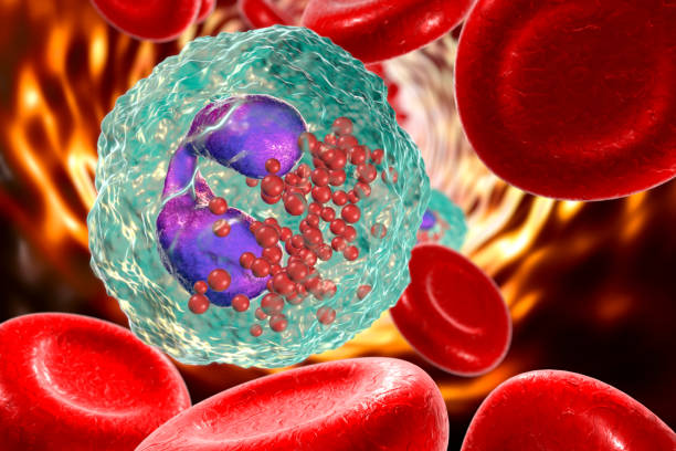 Eosinophil in blood, a white blood cell stock photo