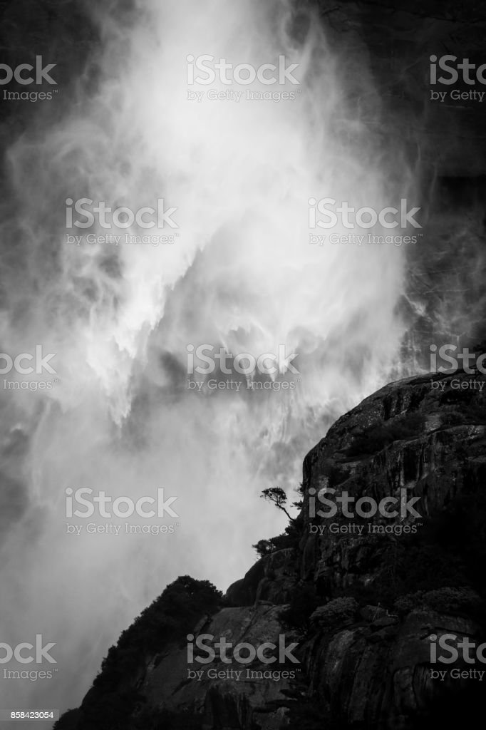 Epic lone tree in front of Yosemite falls with water falling in the background stock photo
