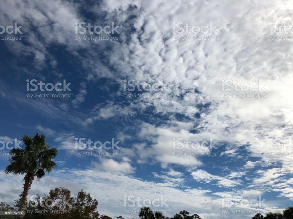Blue Sky\'s Ahead Palm Trees