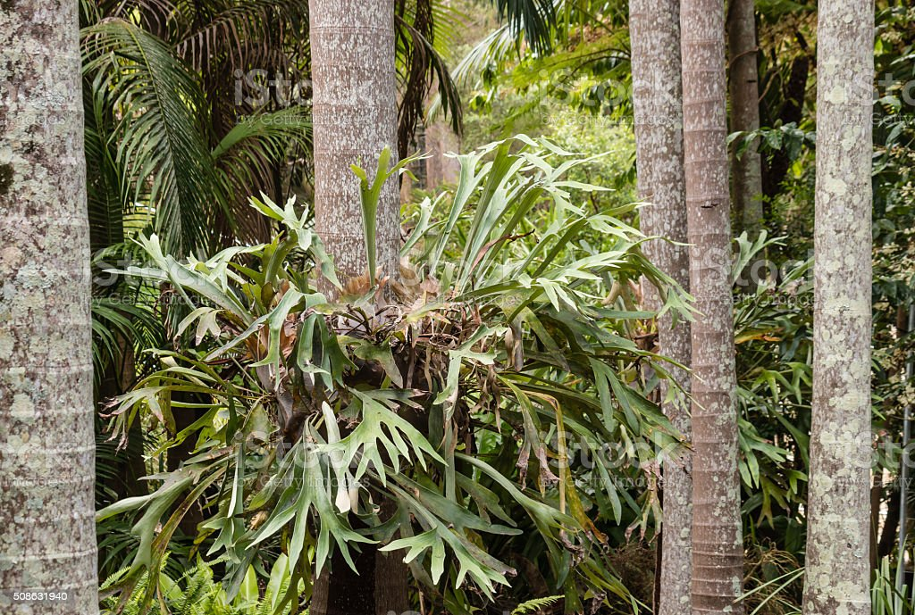 epiphytic bromeliad growing on tree trunk stock photo