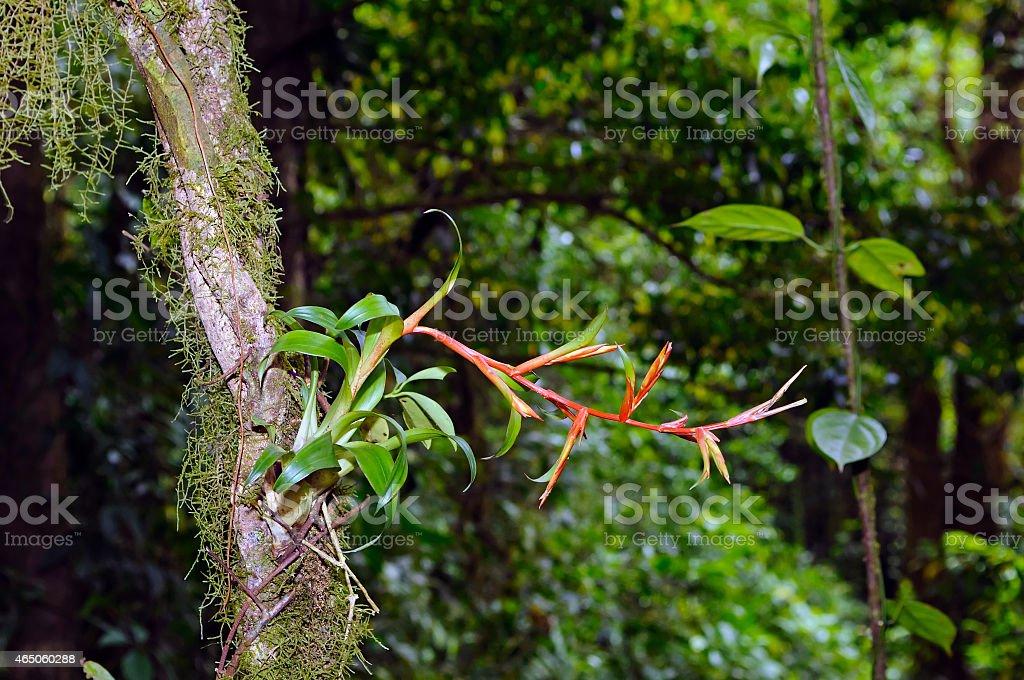 Epiphytic Bromeliengewächs – Foto