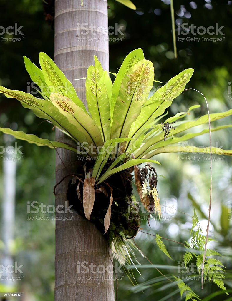 epiphytic plants in the trunk stock photo