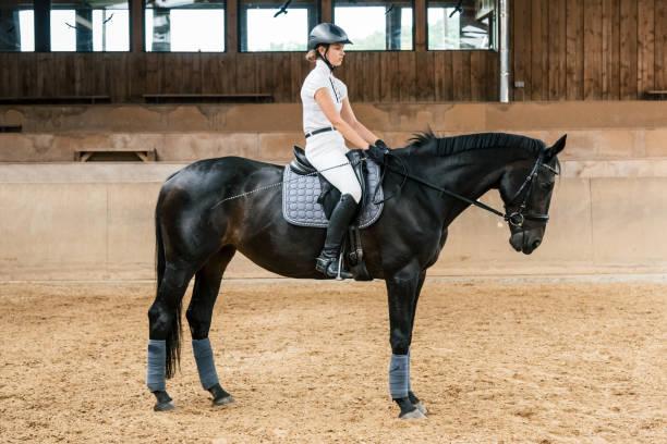 Equestrian hall teenage girl dressage riding picture id591997870?b=1&k=6&m=591997870&s=612x612&w=0&h=0jfochdxapemxuzcw7qwdlrmph6pajulg87h5drwml8=