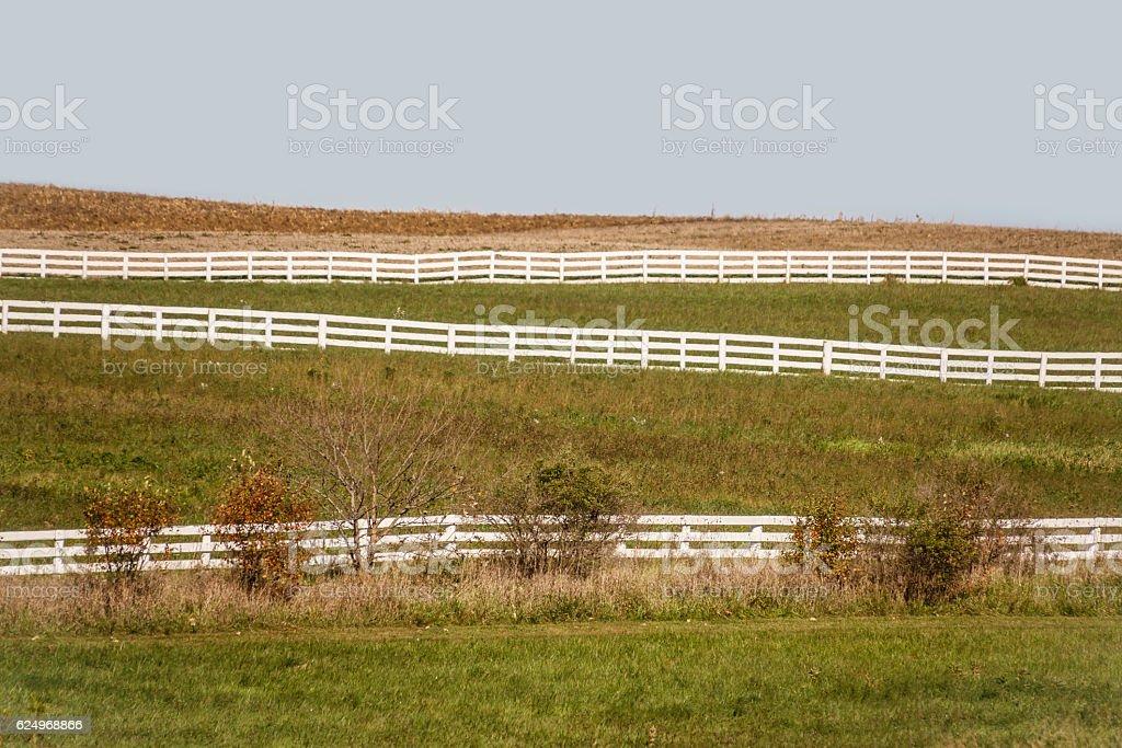 Equestrian hillside stock photo