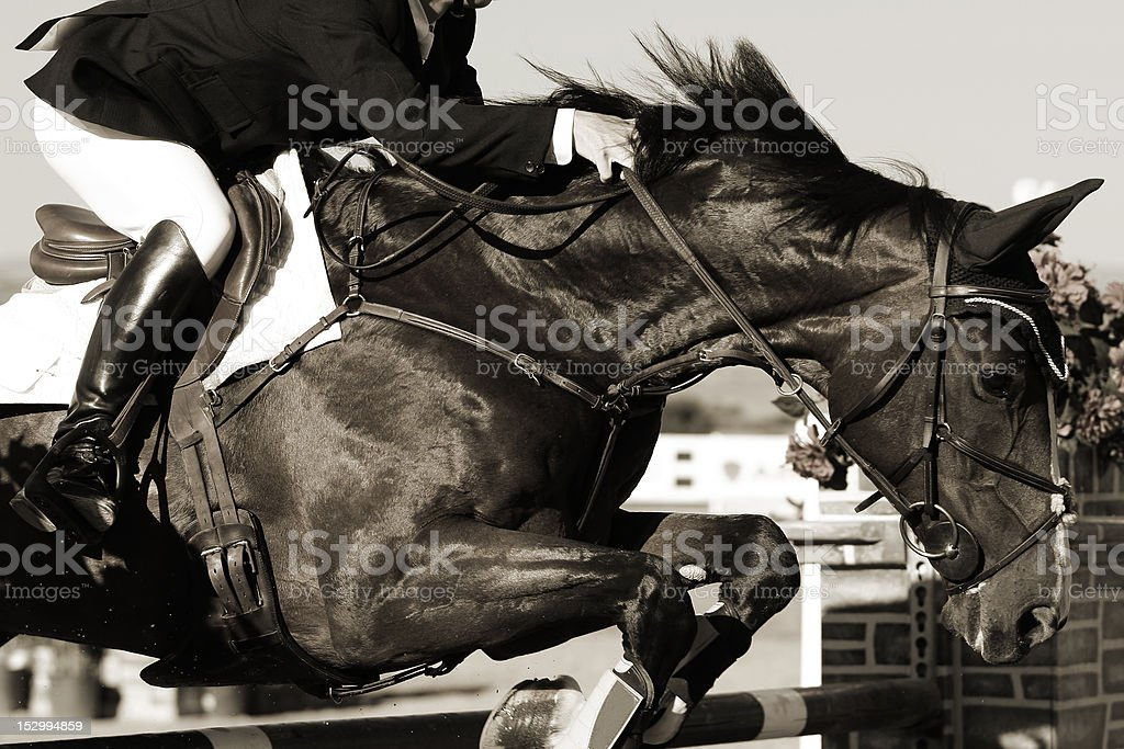 Equestrian Horse and Rider in Action royalty-free stock photo
