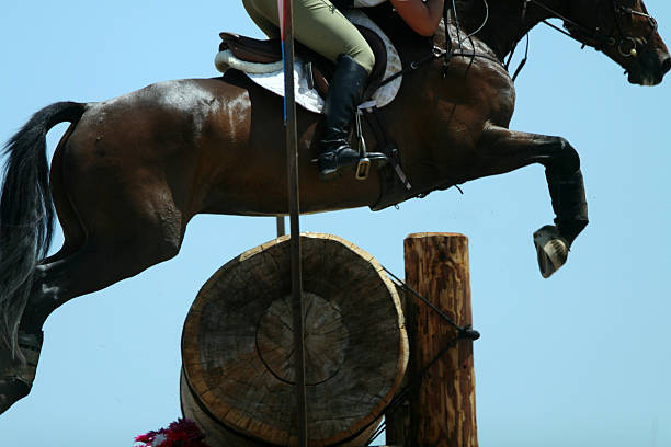 Equestrian jumper on blue stock photo