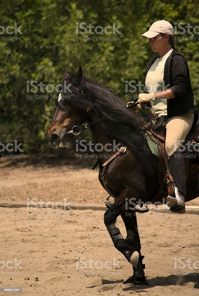 Serie equestre foto stock royalty-free