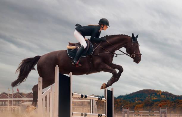 乗馬競技 - 乗馬 ストックフォトと画像