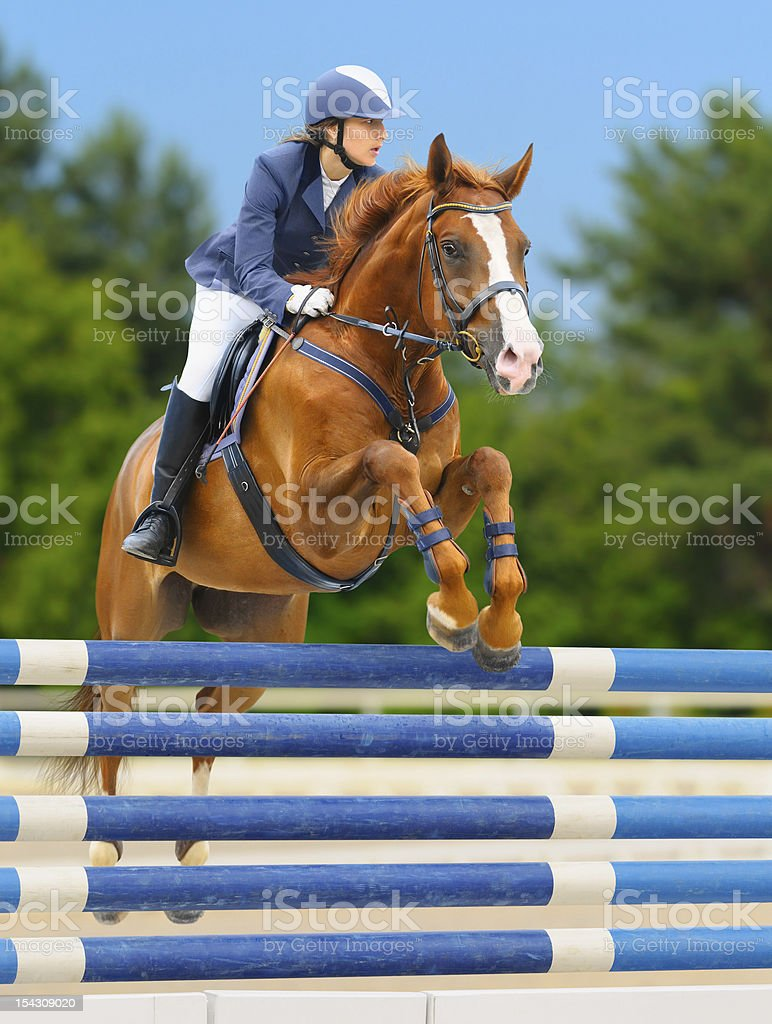 Equestrian sport: show jumping / young woman and sorrel stallion stock photo