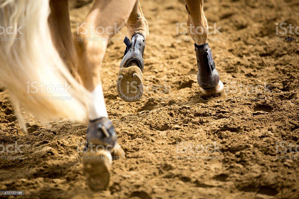 Equestrian Sports stock photo