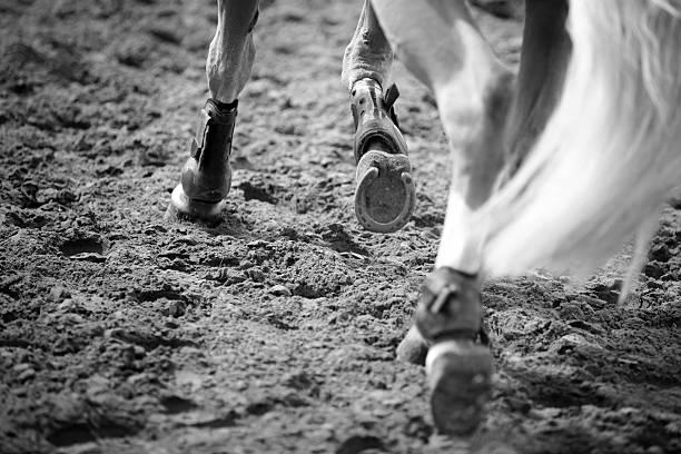 equestrian sports - hästhoppning bildbanksfoton och bilder