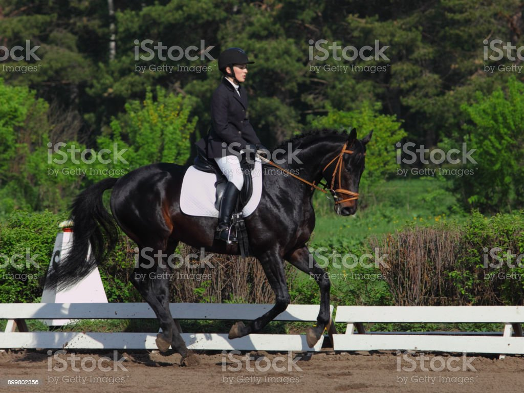 Equestrian Woman In A Formal Riding Dress Riding A Galloping Hanoverian Horse Stock Photo Download Image Now Istock