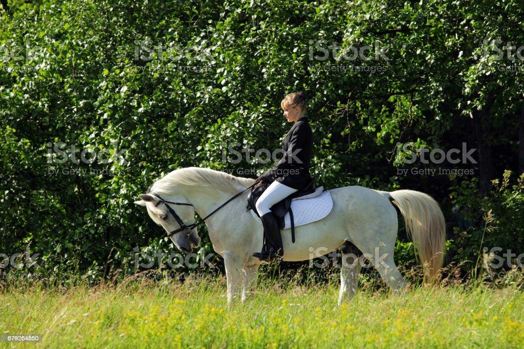 Equestrian woman riding riding white Arabian stallion stock photo
