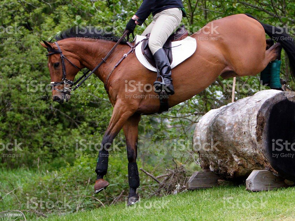 Equine Athlete 1 stock photo