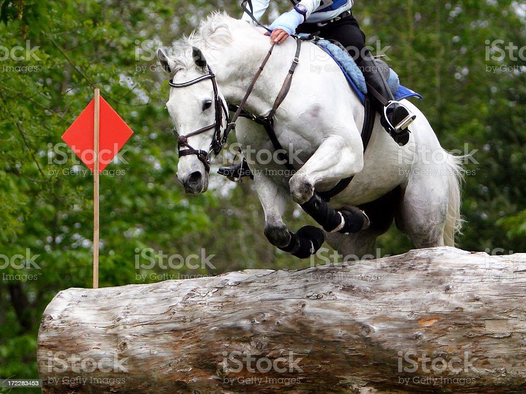 Equine Athlete 2 stock photo