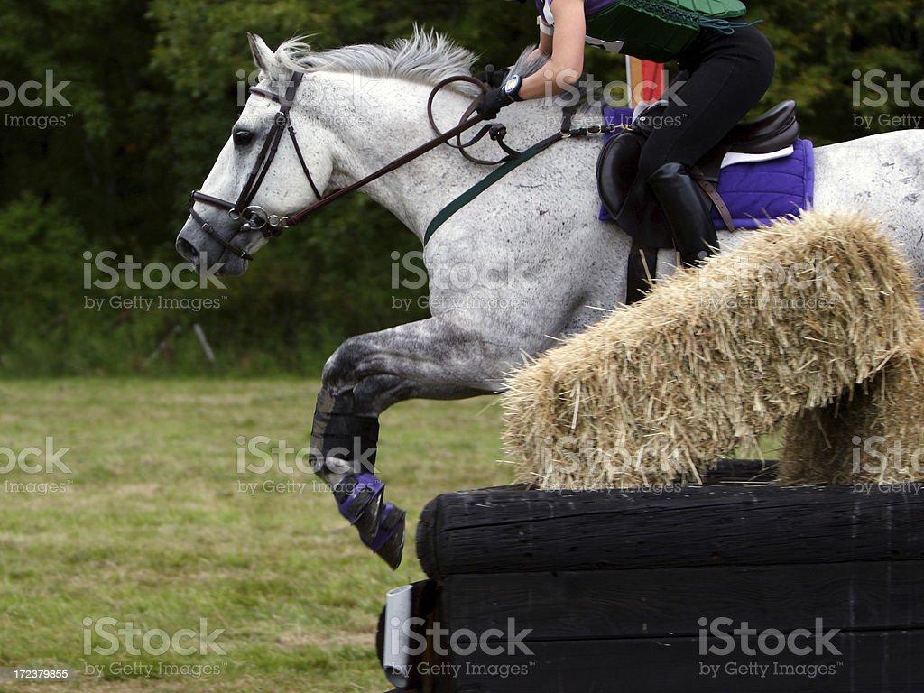 Equine Athlete 3 stock photo
