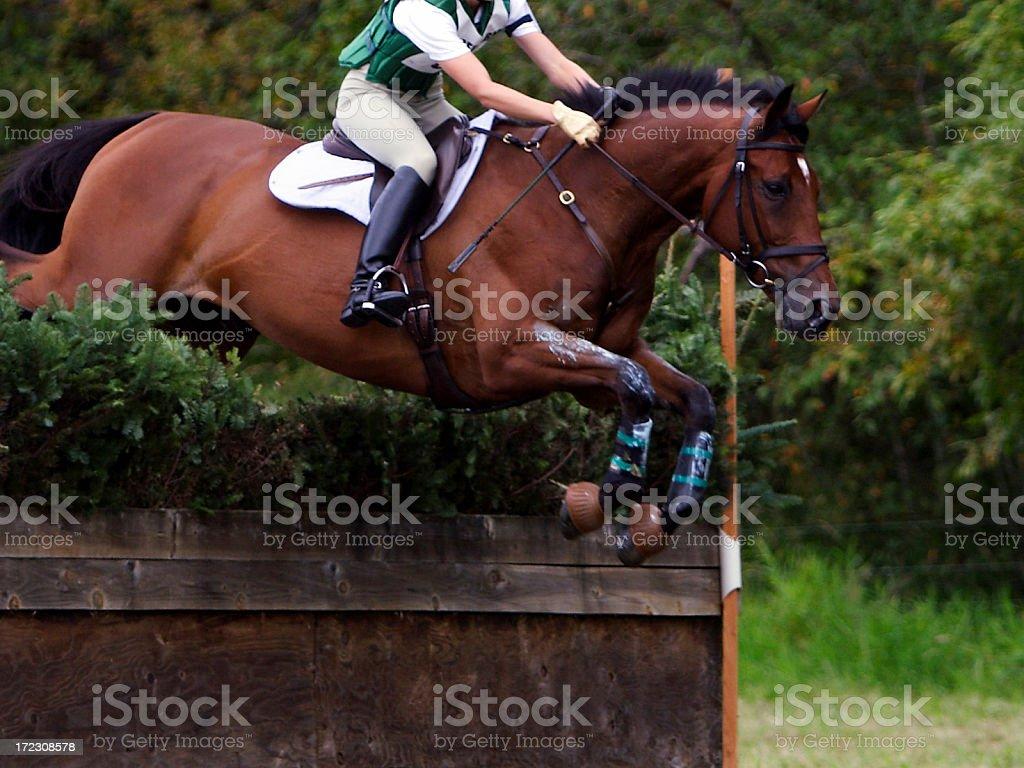 Equine Athlete 4 stock photo
