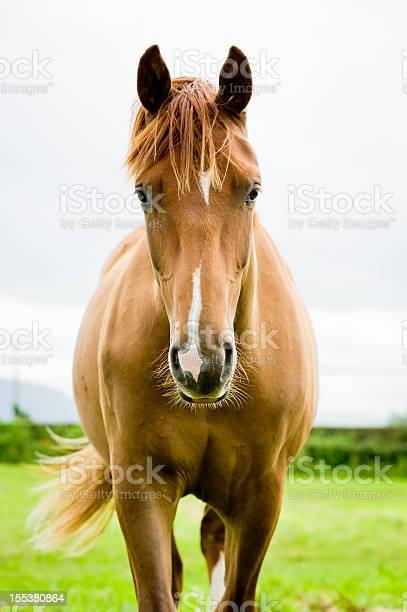 Equine beauty picture id155380864?b=1&k=6&m=155380864&s=612x612&h=ccrayeul hcgrs yf1lcc h4pfkn8pjngvz0ervmggg=