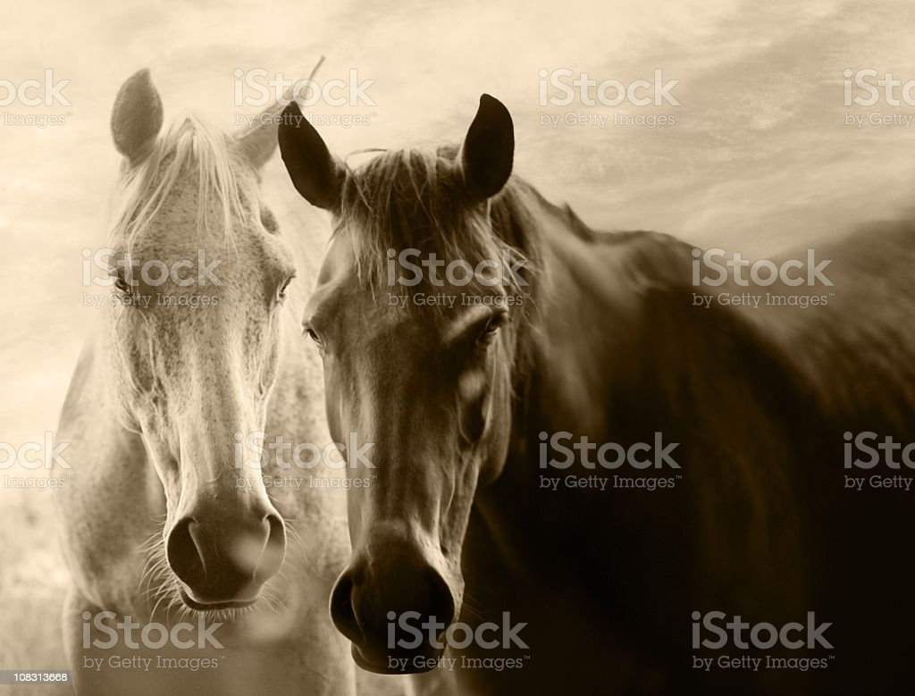 Equine love stock photo