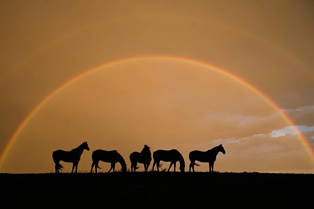 Equine rainbow picture id144275607?b=1&k=6&m=144275607&s=612x612&w=0&h=abggaekjybrkle1xat9iwgmzalaody5ezotbj3rfdri=