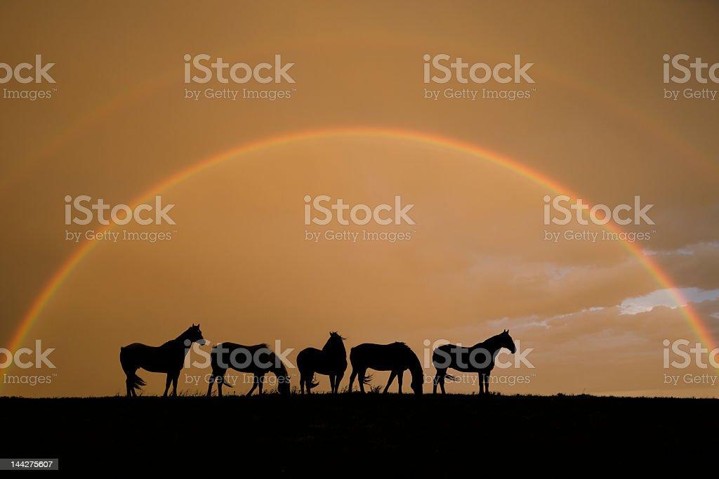 Equine Rainbow stock photo