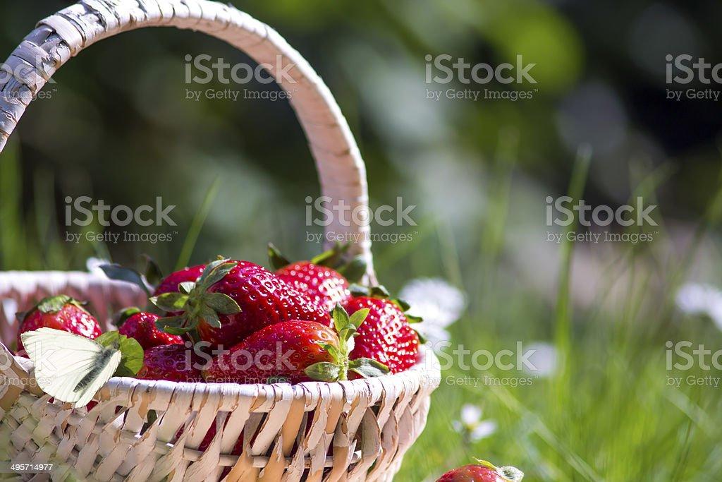 Erdbeeren korb stock photo