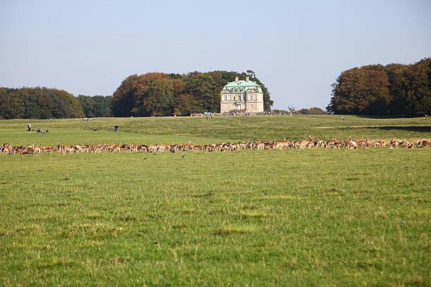 eremitage slottet palace in die zum unesco-weltkulturerbe dyrehave - eremitage stock-fotos und bilder