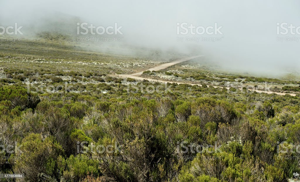 Erica vegetation belt,Bale Mountains, Ethiopia stock photo