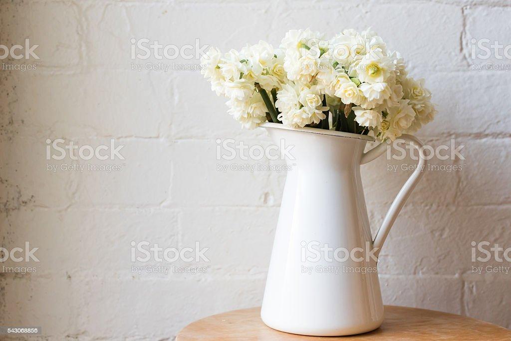 Erlicheer daffodils in white jug stock photo