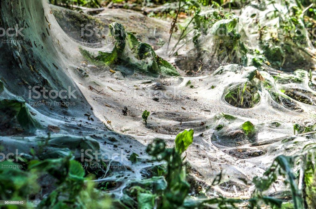 貂蛾活動在樹附近 - 免版稅保護圖庫照片