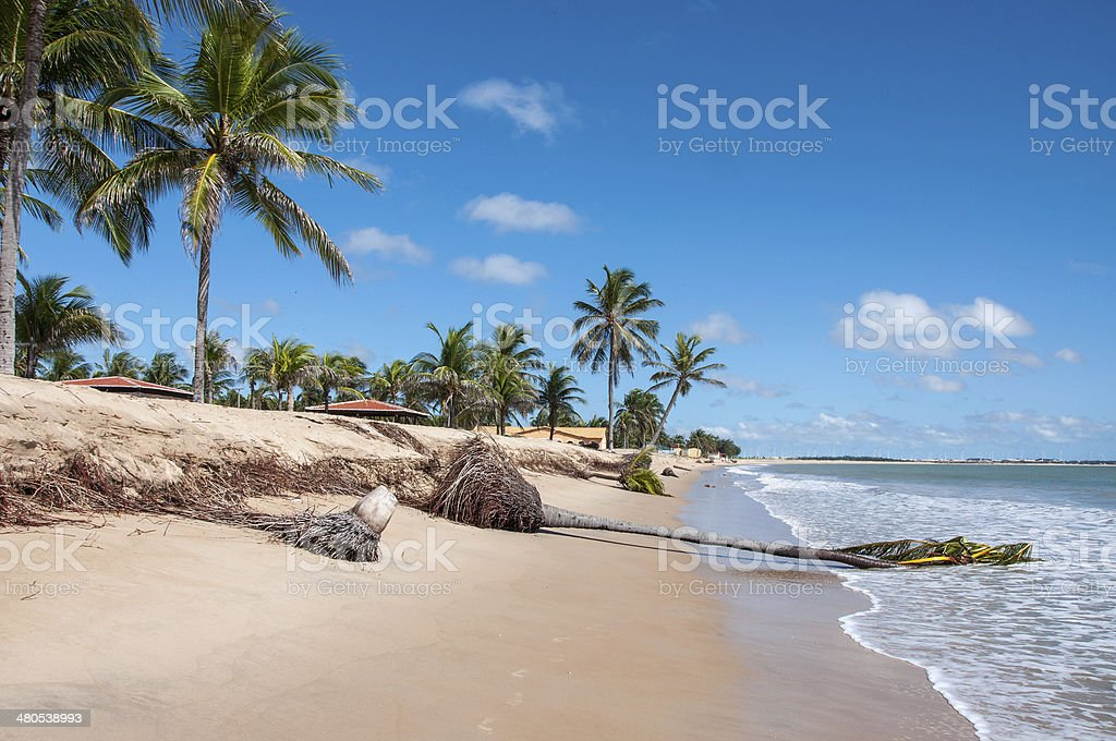 Eroded beach with palms, Pititinga, Natal (Brazil) stock photo