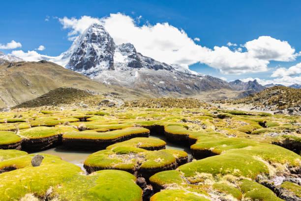 Erodierte Pflanzen in Cordillera Huayhuash, Peru. – Foto