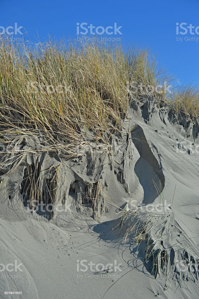 eroded sand dune and beach grass stock photo