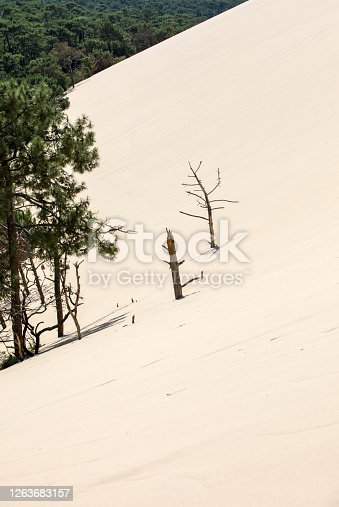 Erosion of trees on the edge of the Dune of Pilat, the tallest sand dune in Europe. La Teste-de-Buch, Arcachon Bay, Aquitaine, France