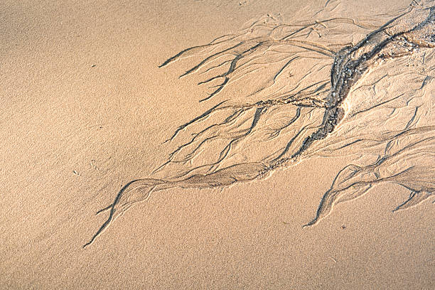 nadżerka pattarn na piasku - erodowany zdjęcia i obrazy z banku zdjęć