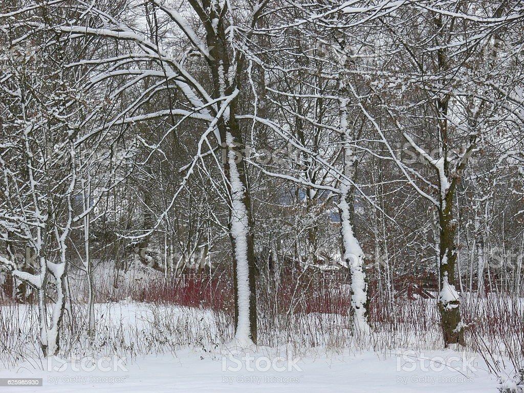Erster Schnee im Wald stock photo