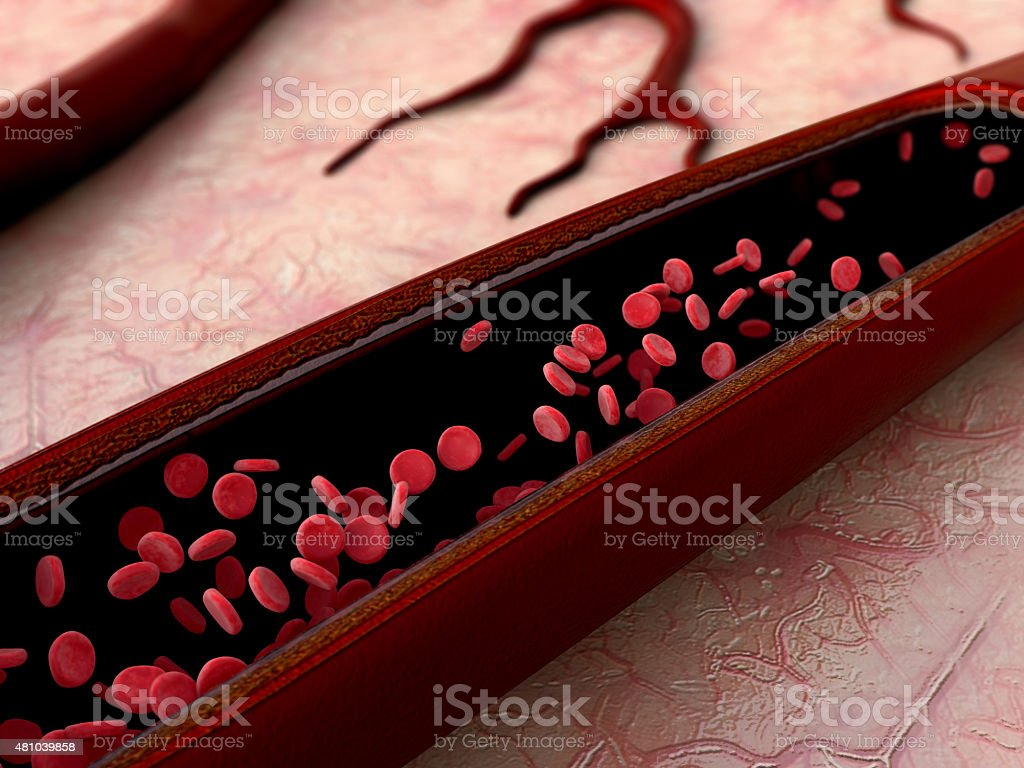 erythrocyte, vein stock photo