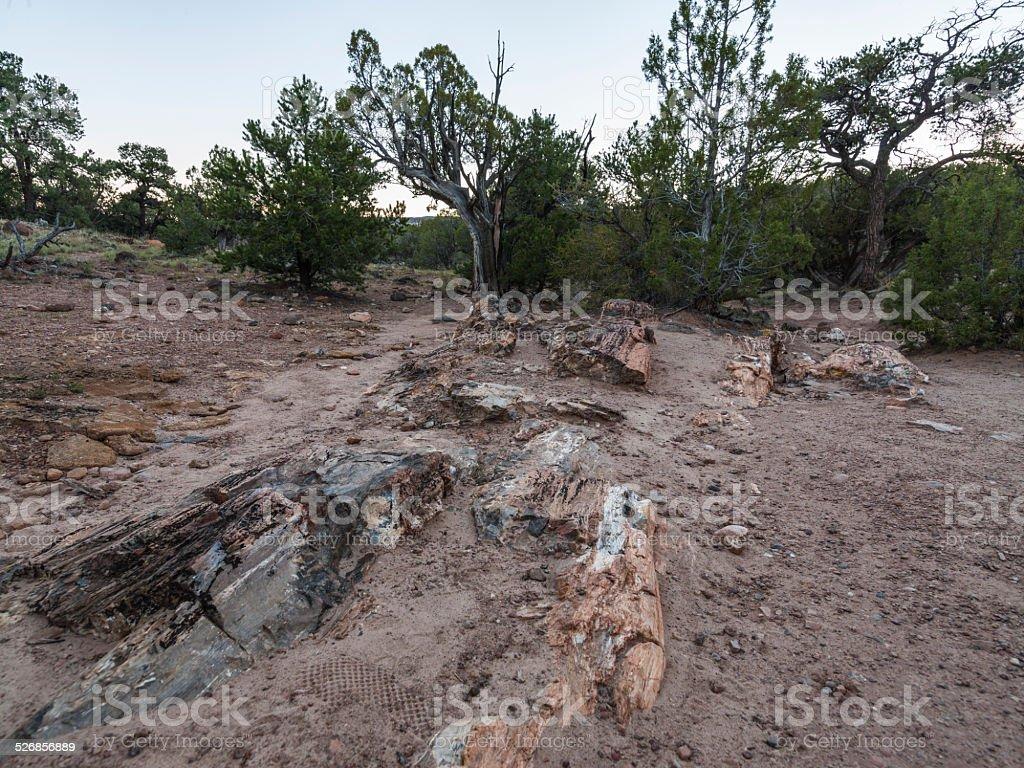 Escalante Petrified Forest State Park (Utah): petrified trees. stock photo