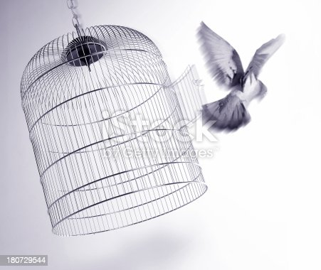 Bird escaping from its cage