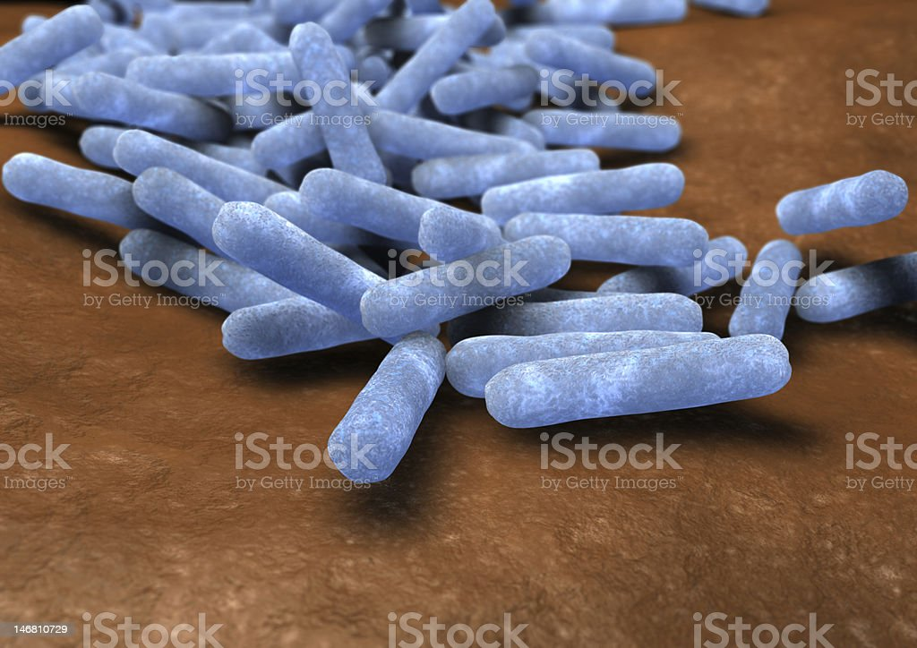 Escherichia coli  bacteria royalty-free stock photo