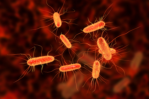 Escherichia coli bacterium, E.coli, gram-negative rod-shaped bacteria, part of intestinal normal flora and causative agent of diarrhea and inflammations of different location, 3D illustration