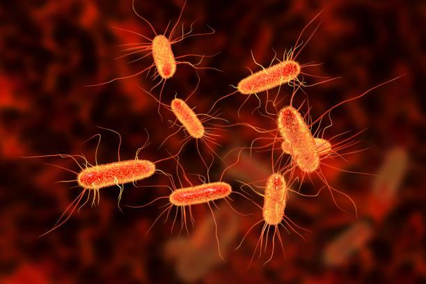Escherichia coli bacterium stock photo